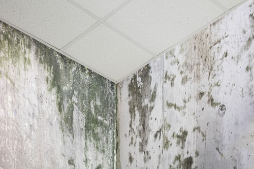 Home Remedies to  Remove Mold Damage in Miami